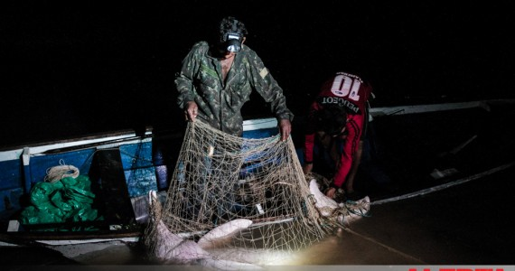 Hidden by the cover of night and camouflage, the botos suffer and drown in the nets of fishermen