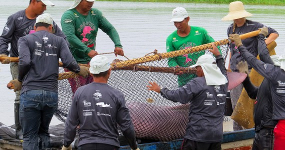 Project Boto. Mark and recapture of river dolphins expedition for population studies